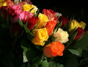 kolory-kwiatow