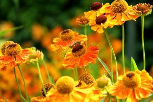 Ulubione kwiaty Polek.